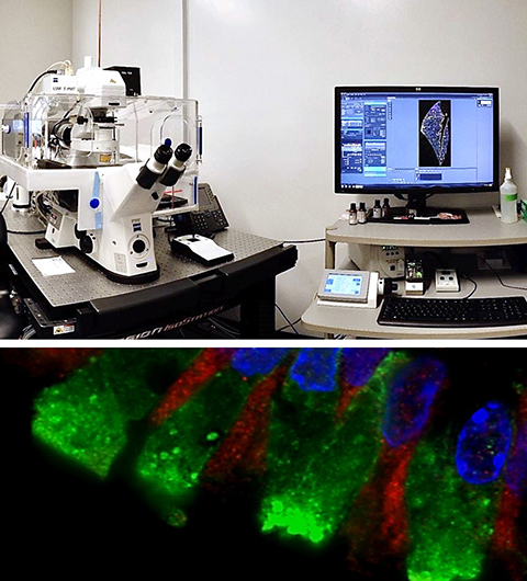 Zeiss LSM 780 Confocal with Airyscan